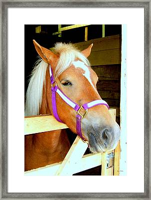 In The Stable 001 Framed Print by George Bostian
