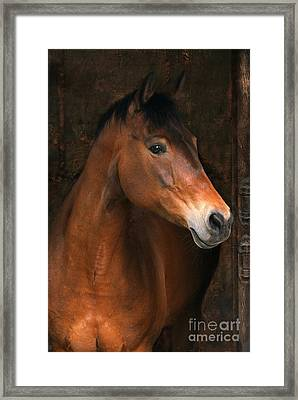 In The Stable Framed Print by Angel  Tarantella