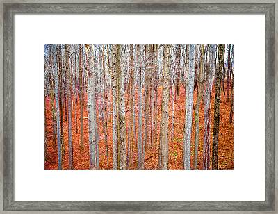 Framed Print featuring the photograph In The Sticks by April Reppucci
