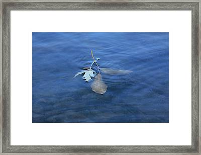 Framed Print featuring the photograph In The Stillness by Viviana  Nadowski