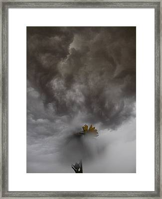 In The Storm Framed Print by Tim Good