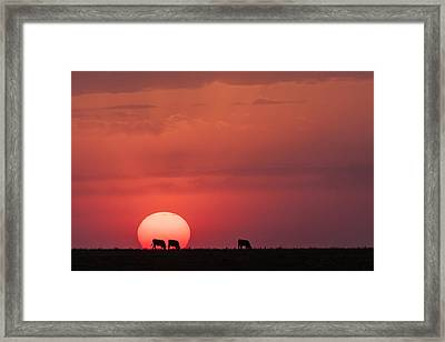 Framed Print featuring the photograph In The Sun by Scott Bean