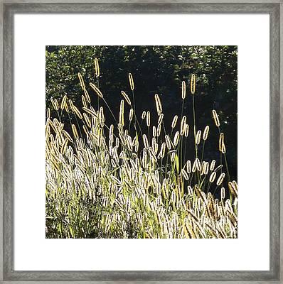 In The Sunshine Framed Print by Joy Nichols
