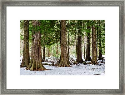 Framed Print featuring the photograph In The Thuja Forest by Kennerth and Birgitta Kullman