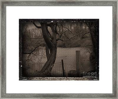 In The Times Of The Hanging Trees Framed Print by Roxy Riou