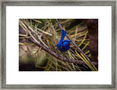 In The Tree Framed Print