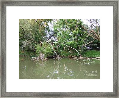 In The Trees Framed Print by Deborah DeLaBarre
