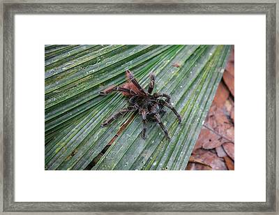In The Upper Amazon Jungle, On A Trail Framed Print by Mallorie Ostrowitz