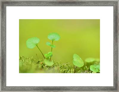 In The Valley Of The Leprechauns Framed Print