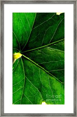 In The Viens Framed Print