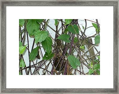 In The Vines Framed Print