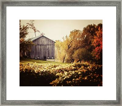 In The Vineyard - Barn Landscape Framed Print by Lisa Russo