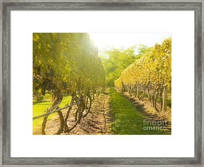 In The Vineyard Framed Print