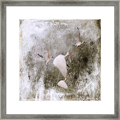 In The Vortex Of A Storm Framed Print by Irma BACKELANT GALLERIES