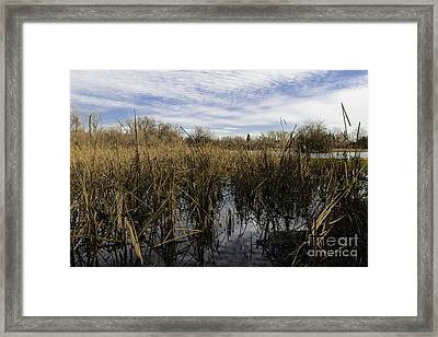 In The Weeds Framed Print by David Taylor