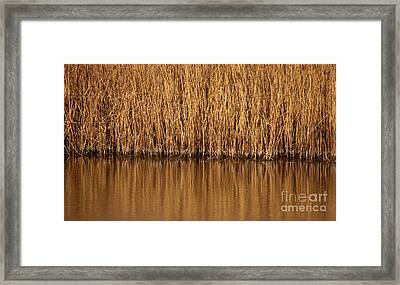 In The Weeds Framed Print