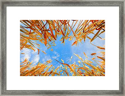 In The Wheat Framed Print by Alexey Stiop