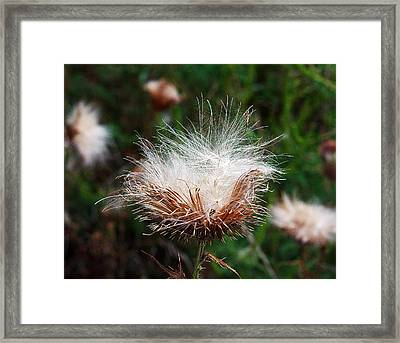 In The Wind Framed Print by Greg  Betsworth
