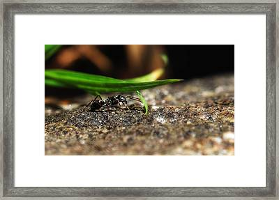 In The Wind Of Something Framed Print by Kent Mathiesen