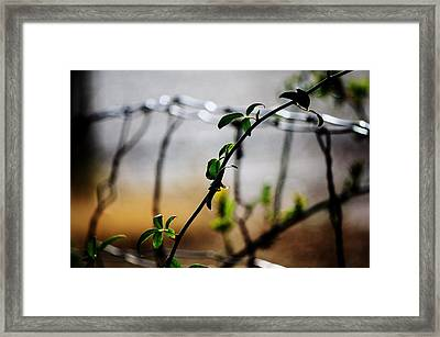 Framed Print featuring the photograph In The Wire  by Jessica Shelton