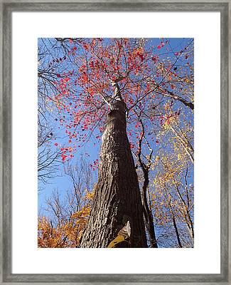 In The Woods 1 Framed Print