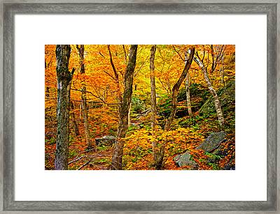 In The Woods Framed Print by Bill Howard