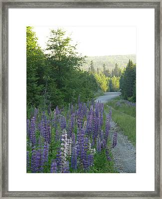 In The Woods Framed Print by Brenda Ketch