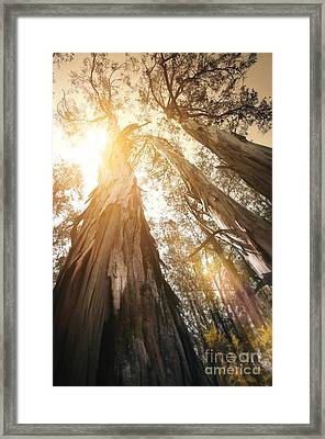 In The Woods Framed Print by Carlos Caetano