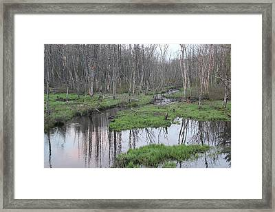 In The Woods Framed Print by John Ricard jr