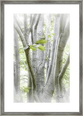 In The Woods Framed Print by Julie Palencia