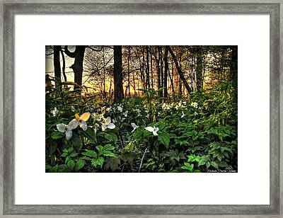 In The Woods Framed Print by Michaela Preston