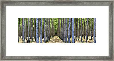 In The Woods Framed Print by Michelle Calkins