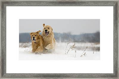 In Their Element Framed Print