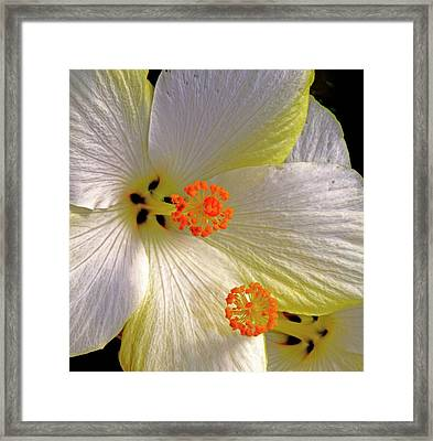 In This Together......... Framed Print