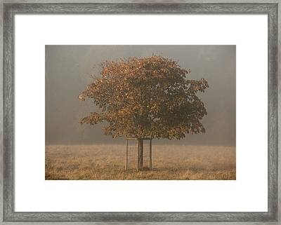 In Training Framed Print by Chris Fletcher