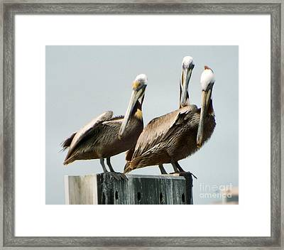In Unison Framed Print