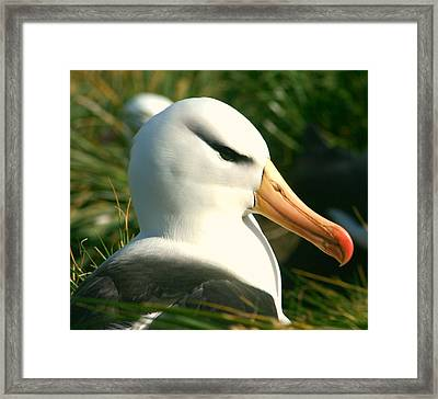 Framed Print featuring the photograph In Waiting by Amanda Stadther