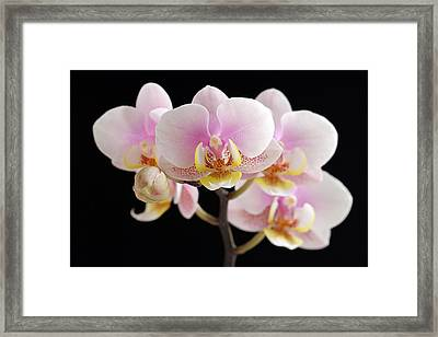 In Your Face Beautiful Framed Print