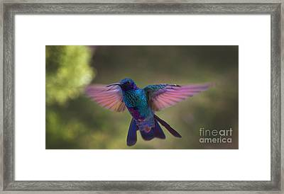In Your Face Buddy Framed Print by Al Bourassa