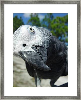 In Your Face Framed Print by Lynda Dawson-Youngclaus