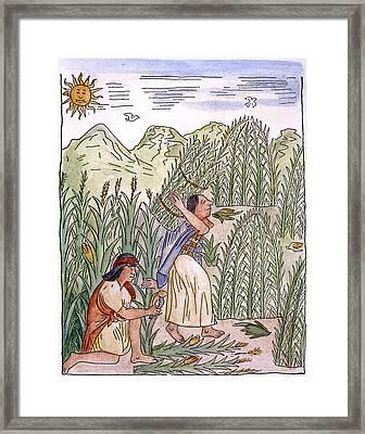 Inca Harvesting, C1583 Framed Print by Granger