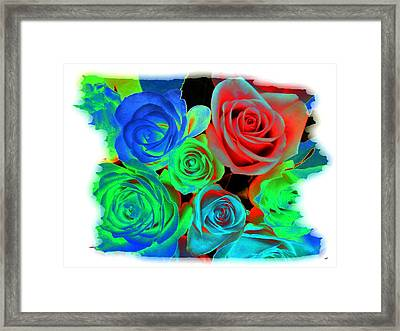 Incandescent Roses Framed Print by Will Borden