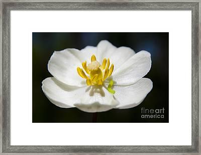 Inchworm  Framed Print by Jeannette Hunt
