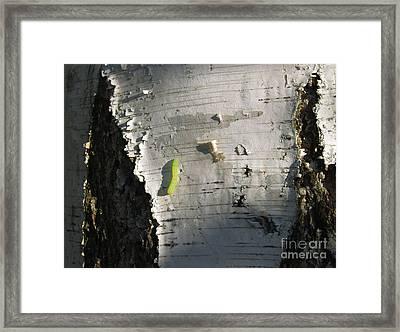 Inchworm On Paper Birch Framed Print