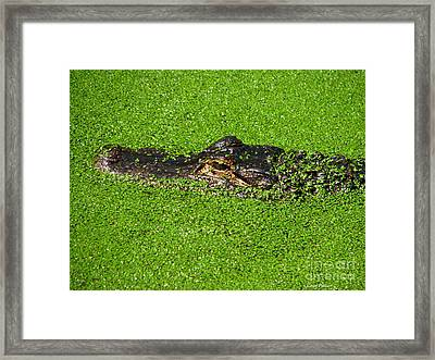 Incognito Framed Print by Greg Patzer