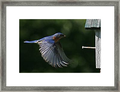 Incoming Framed Print by Douglas Stucky