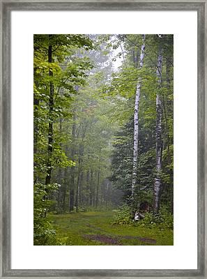 Incoming Fog Framed Print by Susan Crossman Buscho