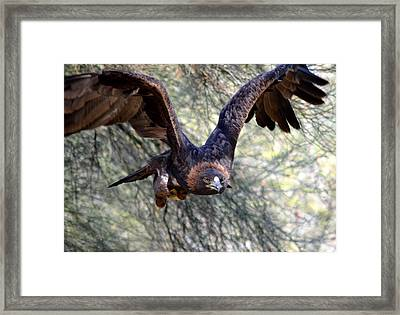 Incoming Golden 2 Framed Print by Fraida Gutovich