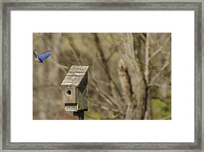 Incoming Framed Print by Heather Applegate