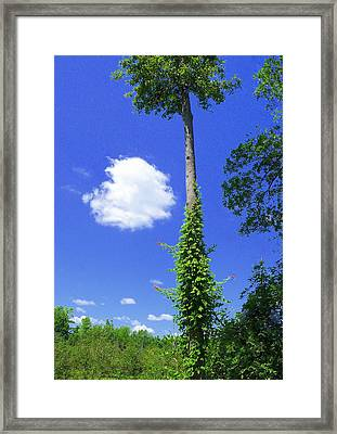 Framed Print featuring the photograph Incoming by Jim Whalen